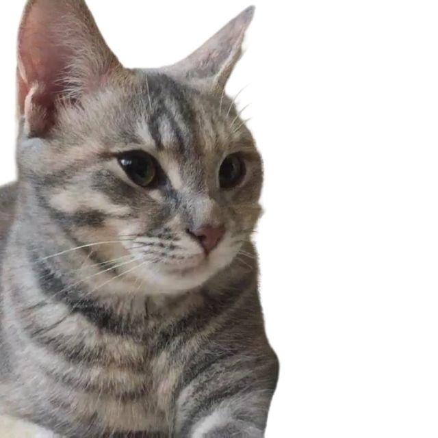 soke kedi