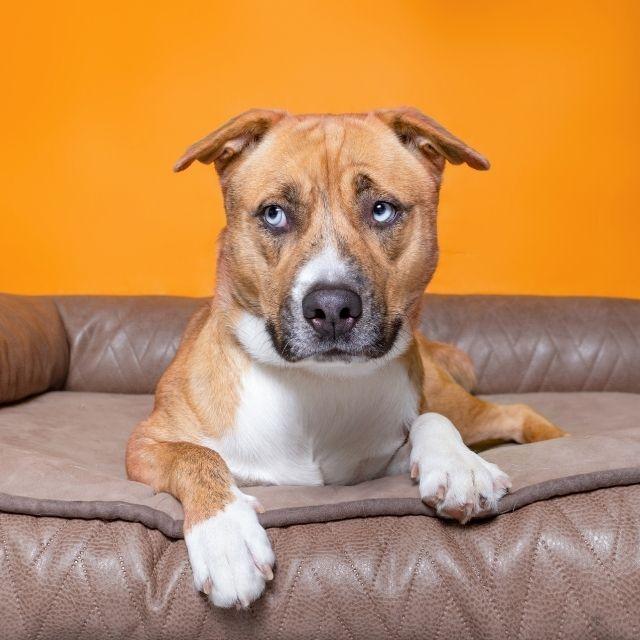 köpekler yalnız kalabilir mi