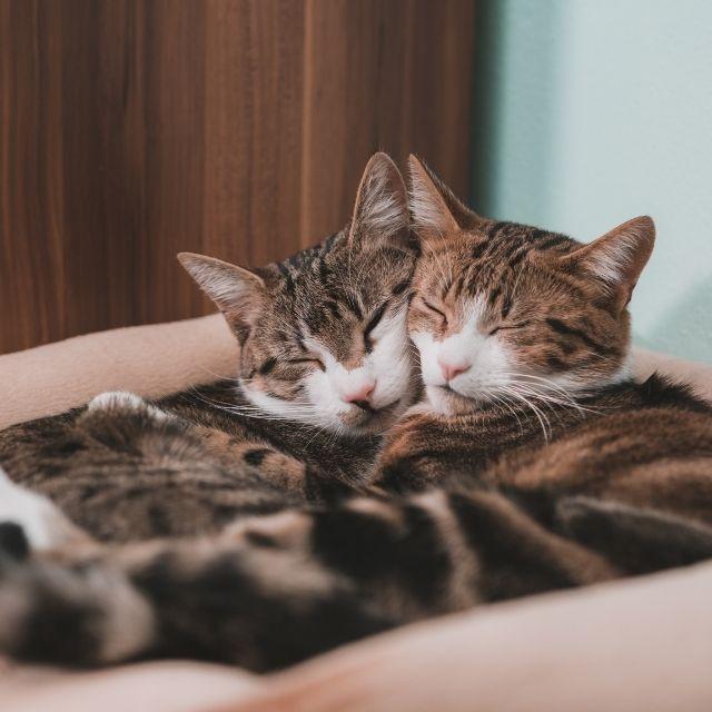 erkek kedi ve dişi kedi farkları