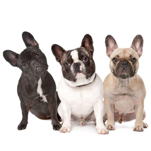 az havlayan köpekler