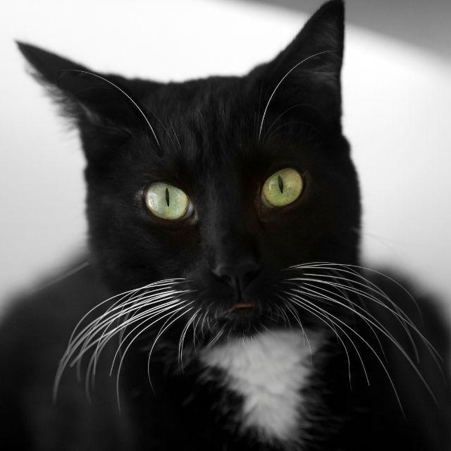 kedi bıyığı
