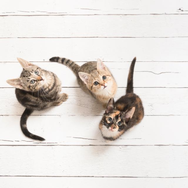 kediler nasıl görür