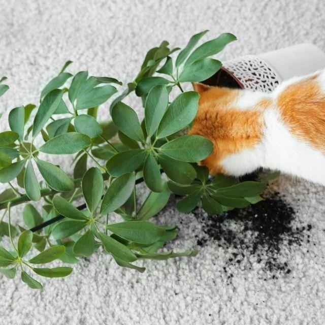 kedileri ev kazalarından korumak