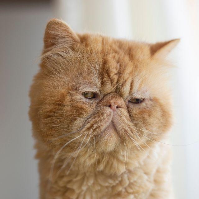 kedilerde davranış bozuklukları