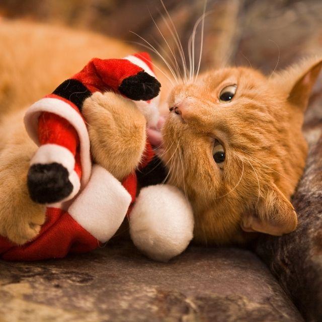 kedi sahiplenirken dikkat edilmesi gerekenler