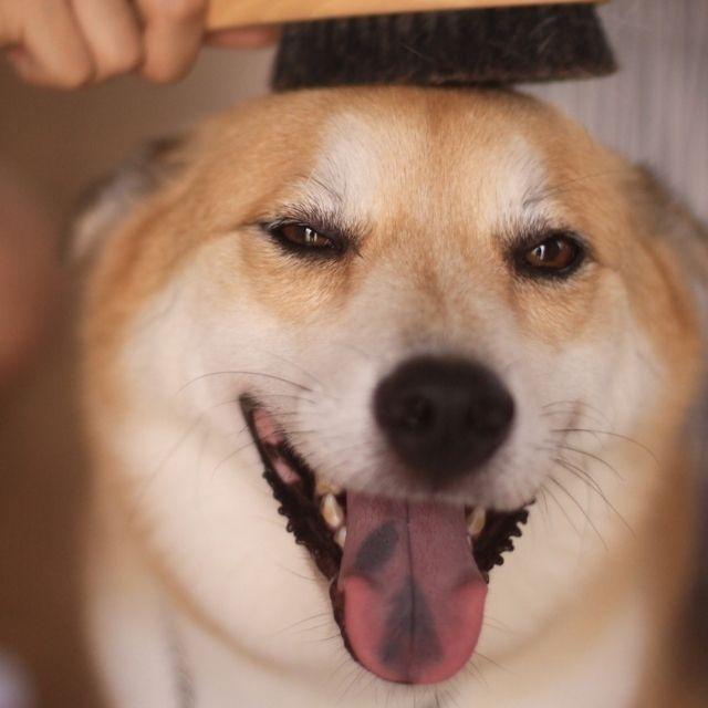 az tüy döken köpekler